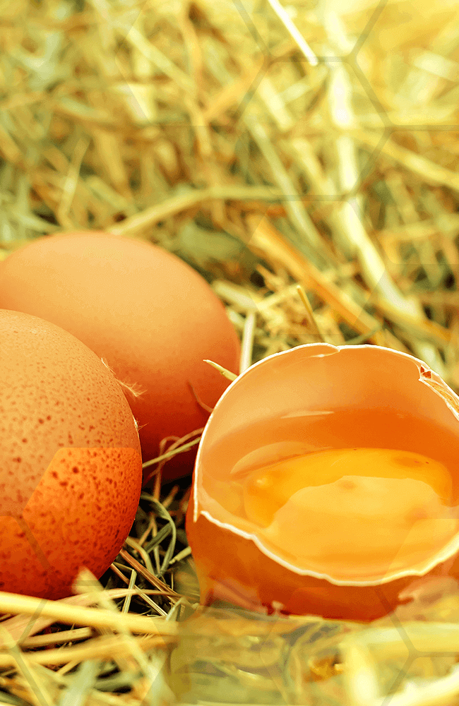 alimentation comment choisir ses œufs